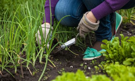 How to prepare your flowerbeds for spring