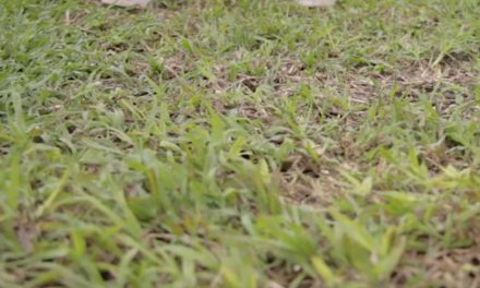 How to treat your lawn in spring