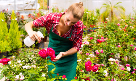 How to maintain a South African garden in February