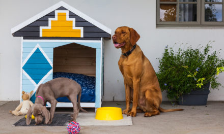 How to make an ndebele dog kennel