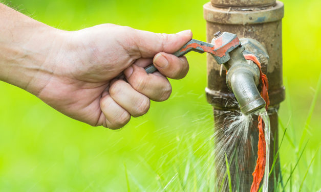 Waterwise tips for National Water Week