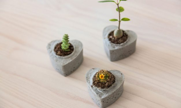 How to make cactus and succulent table favours
