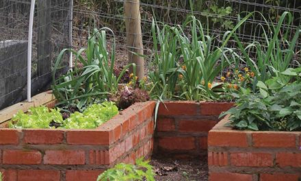 How to create a raised veggie garden