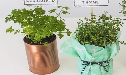 How to make tin can herb planters