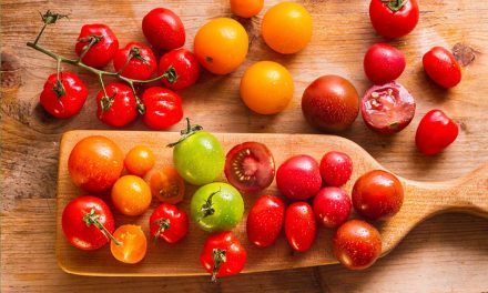 How to plant and care for tomatoes