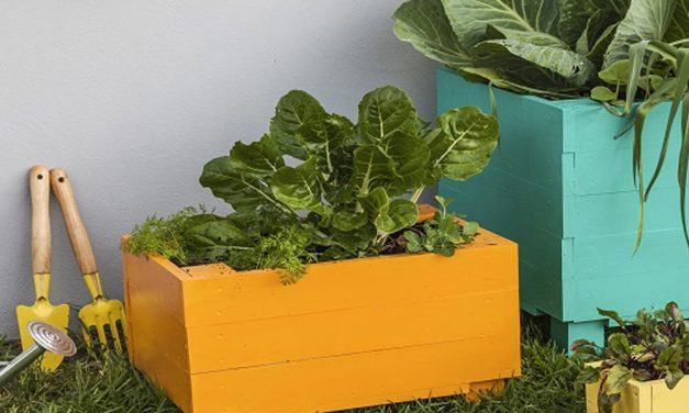 How to make wooden vegetable planters