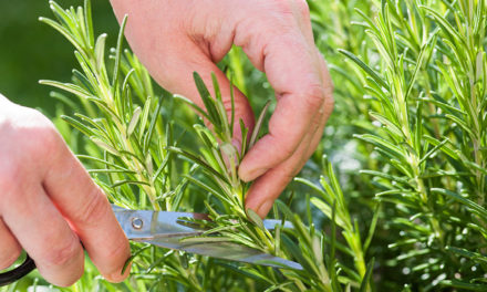 How to grow plants from your own cuttings