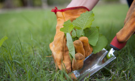 How to banish garden pests and weeds