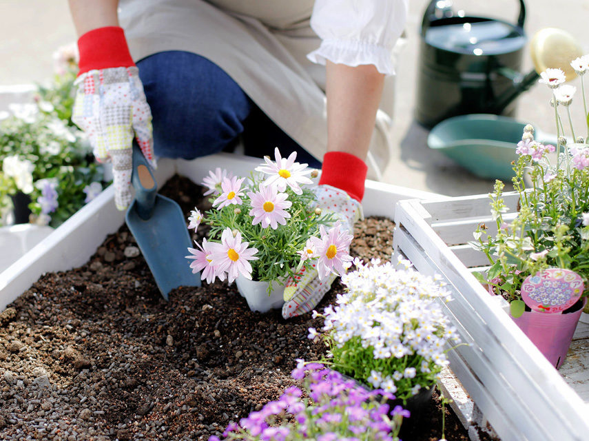 How to plant a plant in your garden