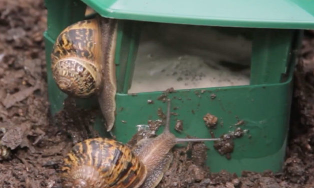 Product Review: Eco snail and slug trap in your garden