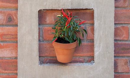 How to frame your pot plants