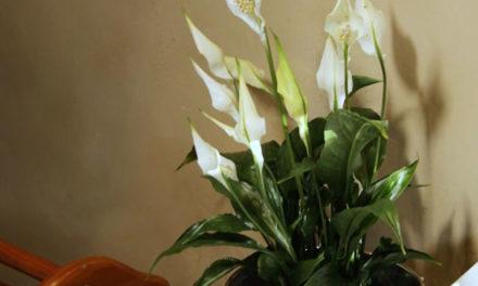 How to Keep Indoor Plants Nourished
