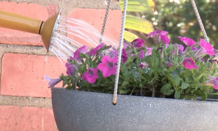 How to Plant on a Hanging Basket