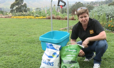 How to feed the lawn in summer