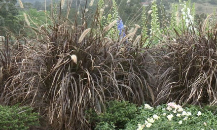 How and when to prune your grasses