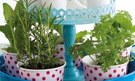 How to make a cake stand herb garden