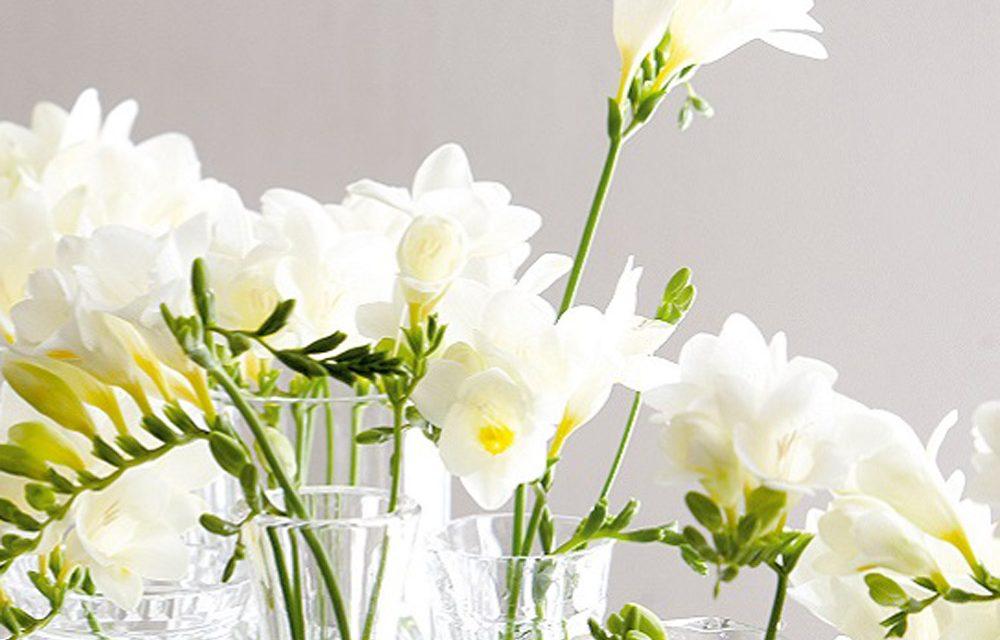 How to make indoor plants