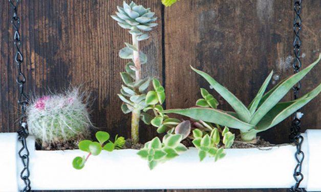 How to display succulents in your garden