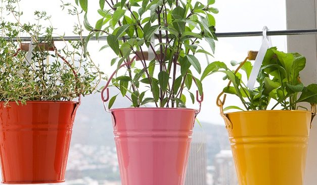 How to make hanging herbs
