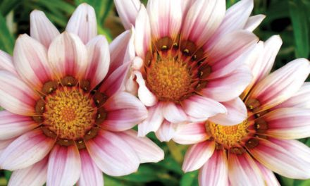How to care for indigenous plants in your garden