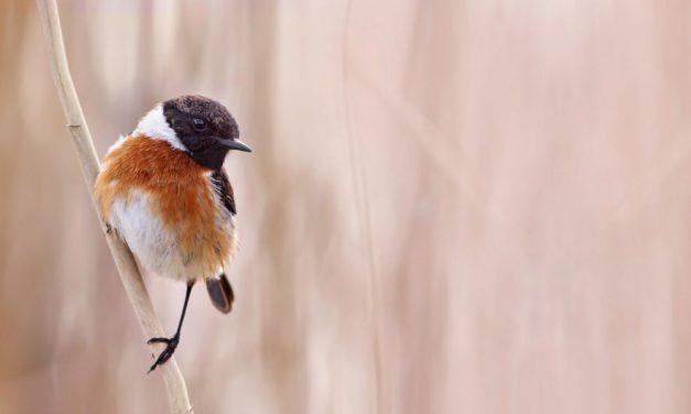 How to use bird feeders in your garden