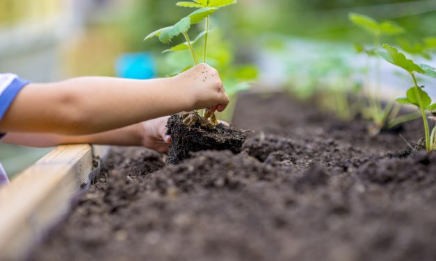 How to use fertilisers the right way