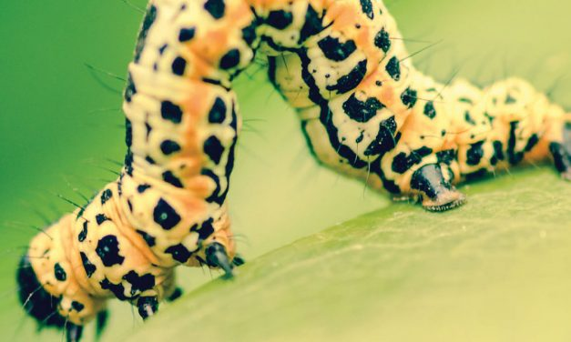 How to identify pests