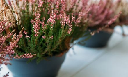 How to care for plants in pots