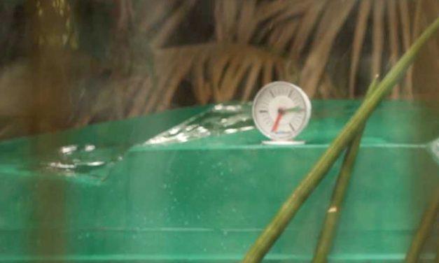 Product Review: Jojo tank gauge
