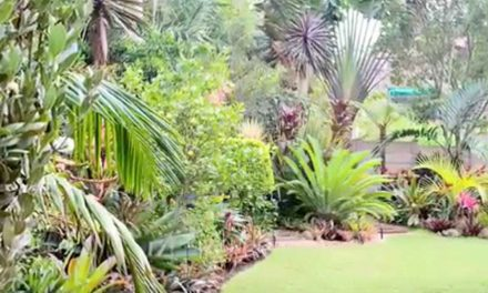 How to create a tropical garden in your home