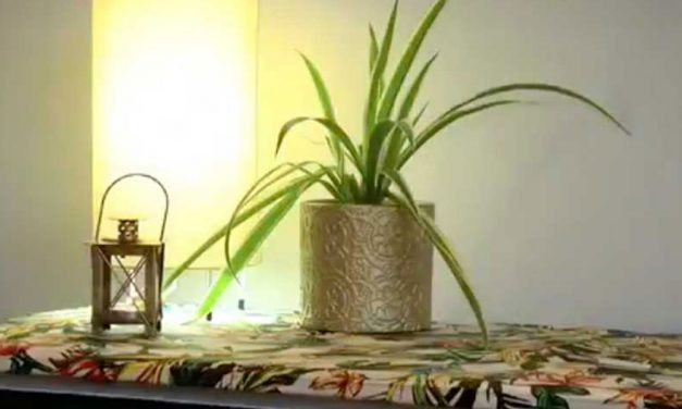 How to give a chest of drawers a tropical makeover