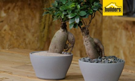 How to take care of a Ginseng Ficus