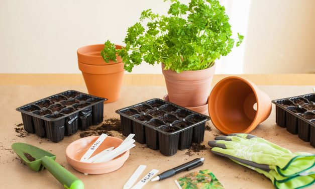 Potted braai plants