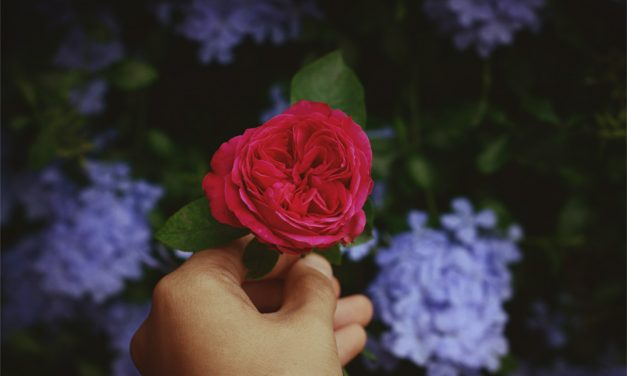Roses' bedfellows
