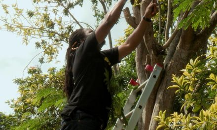 Builders 6m push up extender ladder