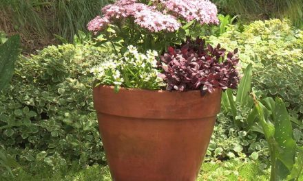 How to plant up a pot