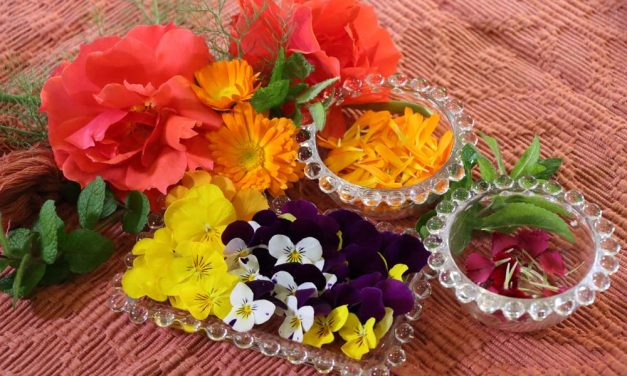 The Sweet Taste of Spring Herbs