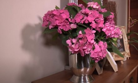 Summer pot plants for your garden