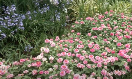5 Summer Tips for your garden