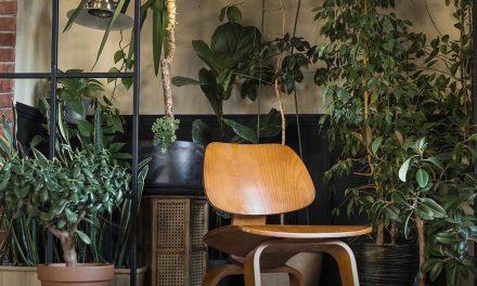 Decor Ideas for an Indoor Garden