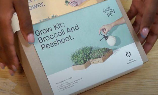 Microgreen Grow Kits