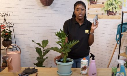 General Plant Care with Nkhensani