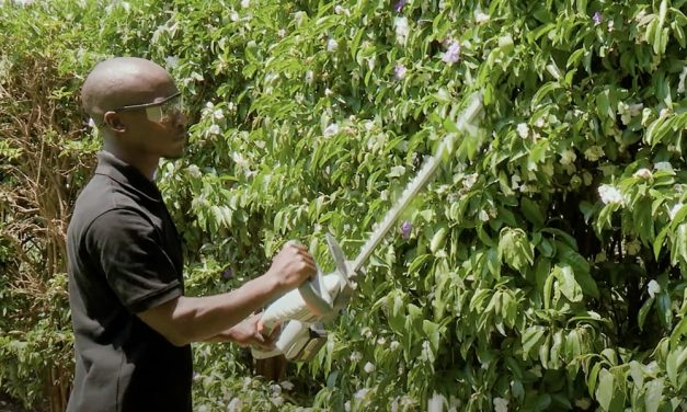 Hedge Trimming With The Ryobi Cordless Hedge Trimmer
