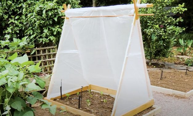 Beat Frost & Save Your Plants With This Frost Protection DIY