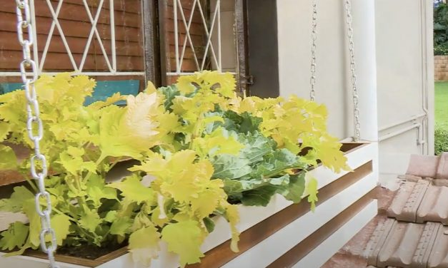 Dress Your Window With A Window Planter Box DIY