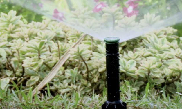 Irrigation | How To Get Started: Irrigation Pop Ups vs Riser Sprinklers