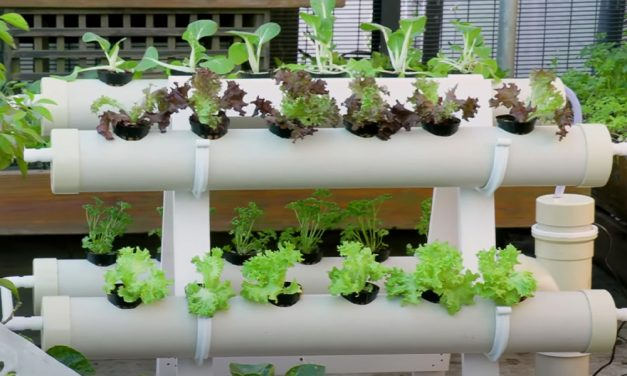 DIY | How To Build Your Own Hydroponics System